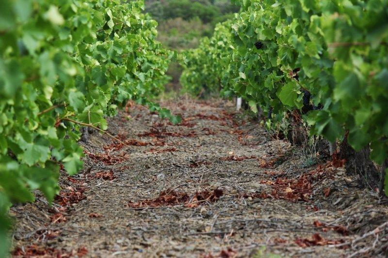 Les vins  dans La vie au Clos Romain aa-800x533