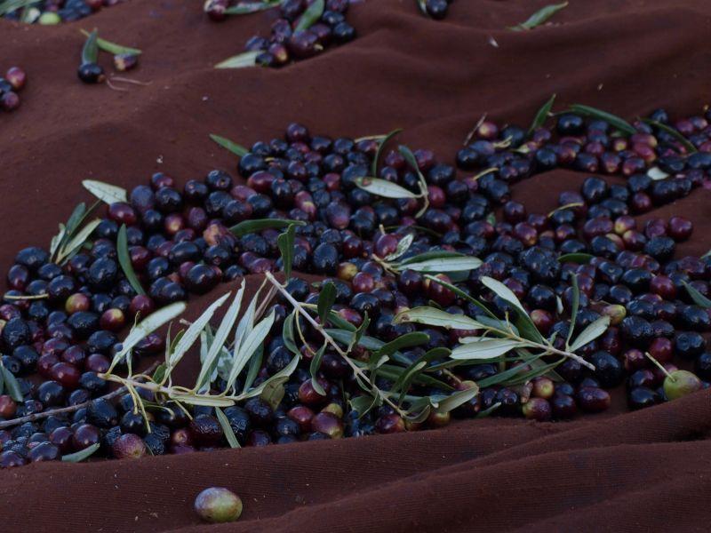 olivesdansbache.jpg