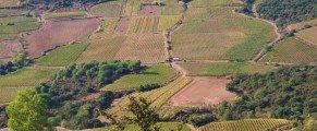 Le vignoble de Cabrières prend ses couleurs d'automne …