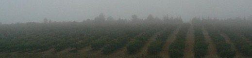 L'oliveraie comme on ne la voit pas souvent …