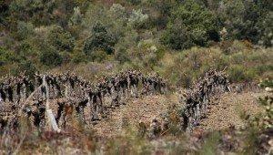 A propos de la taille de la vigne ...  dans Images du domaine agren-300x170