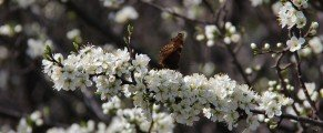 Images de printemps …