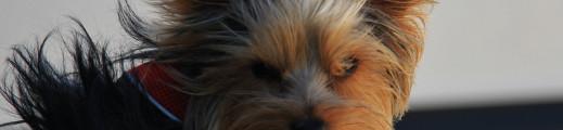 Journée découverte des mines de cuivre / dégustation / rencontres canines …
