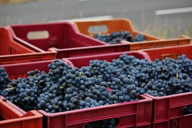 g-640x427 dans Nos vins