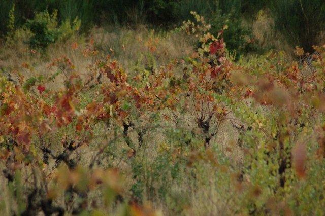 al-640x426 dans Wine tourism/oenotourisme
