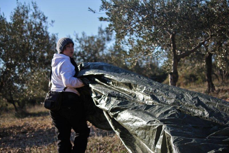 abb-800x533 dans Notre huile d'olive vierge extra