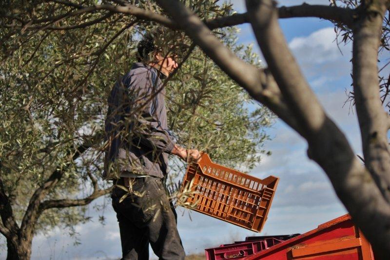 aro-800x533 Huile d'olive dans En savoir plus sur l'huile d'olive