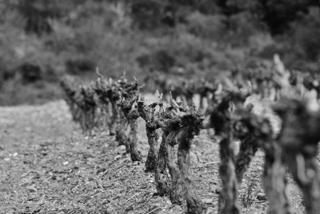 aabb-640x427-2 Photos dans Le travail de la vigne
