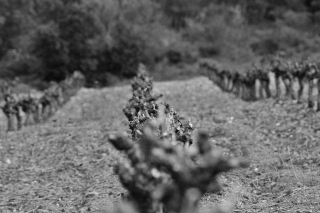 aabc-640x427 Nos vignes dans La vie au Clos Romain