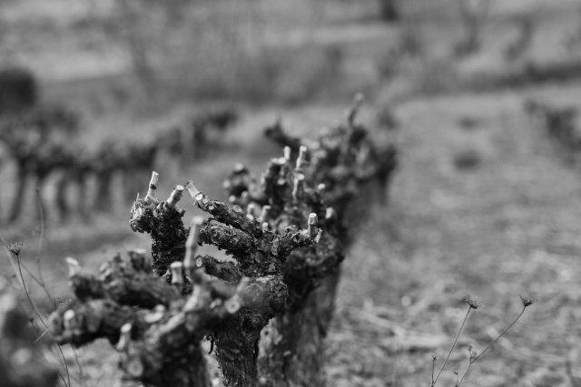 aacv-640x427 dans Photos de vignes