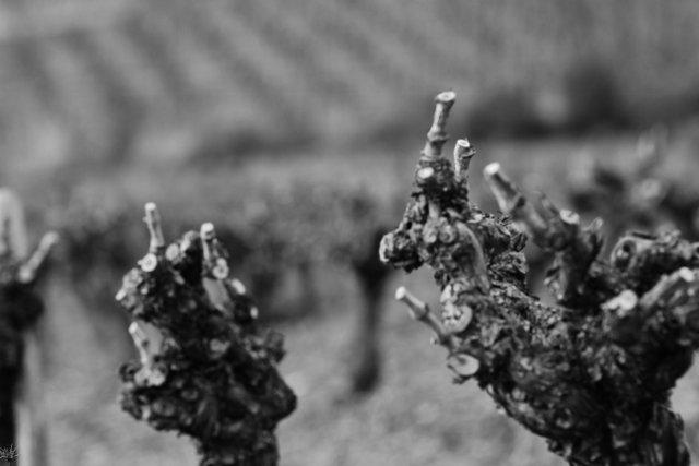 aasou-640x427 dans Wine tourism/oenotourisme
