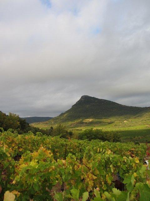 img_8165-480x640-21 Nos vins dans Le travail de cave