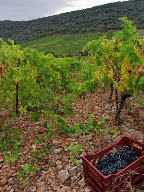 img_8167-480x640 Photos dans Le travail de la vigne
