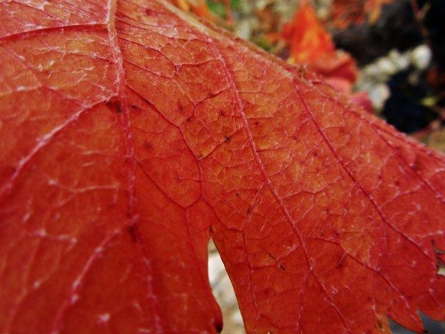 img_8171-640x480 dans Photos de vignes