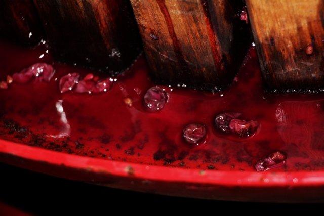 img_8302-640x427 Nos vignes dans Le travail de la vigne